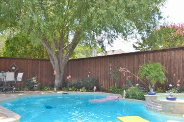 Backyard pool with a huge shade tree looming over it