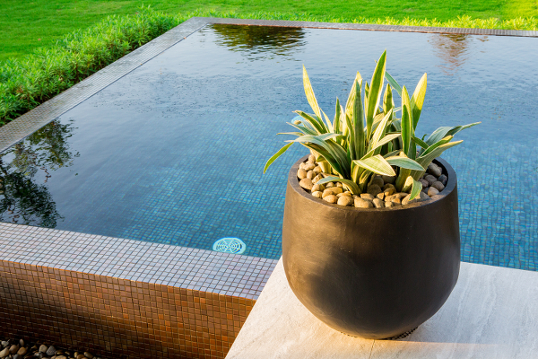 Lovely plant placed on the edge of a semi inground swimming pool